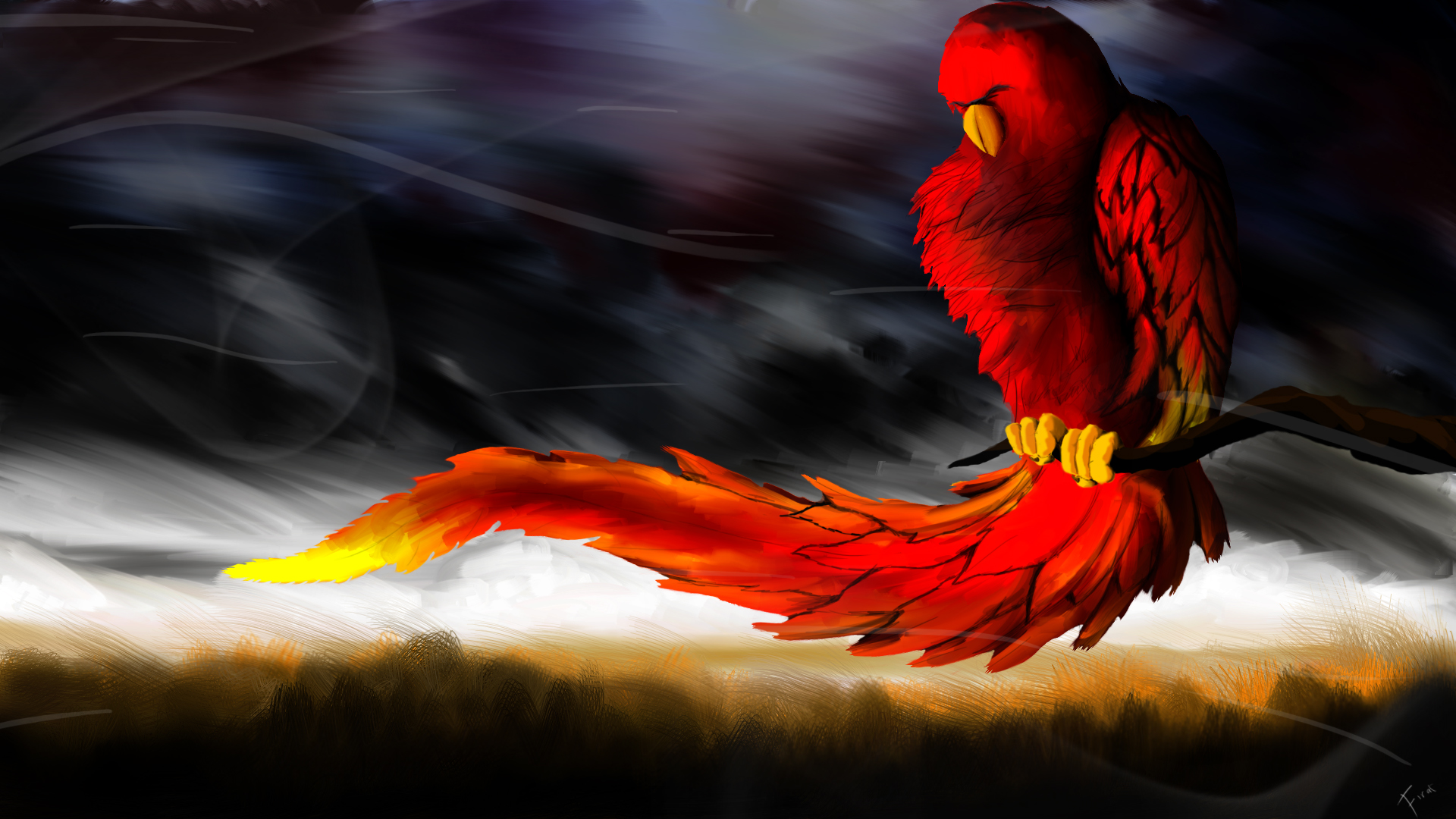 3D Parrot Cool Wallpapers