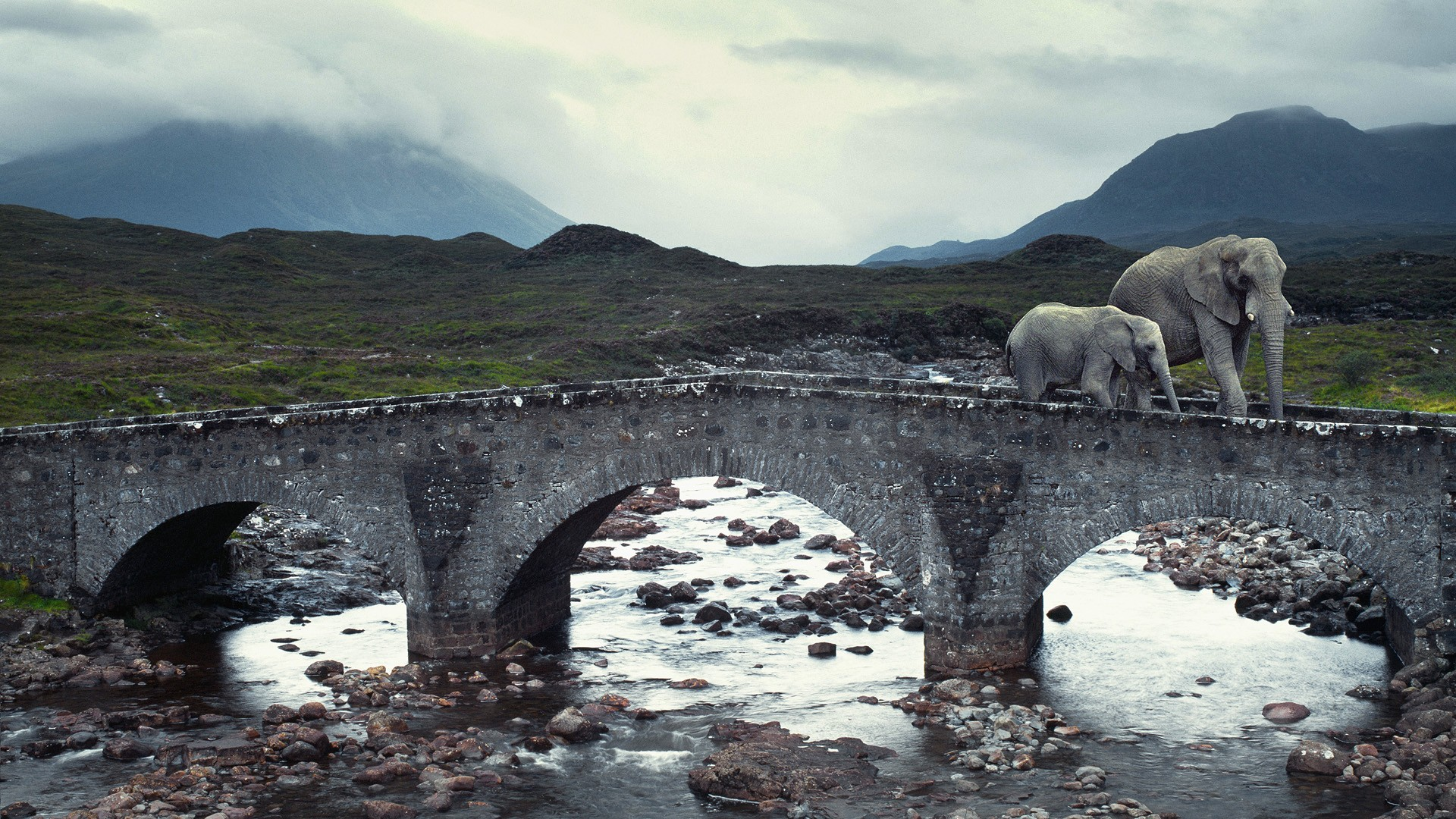 Elephant on Bridge