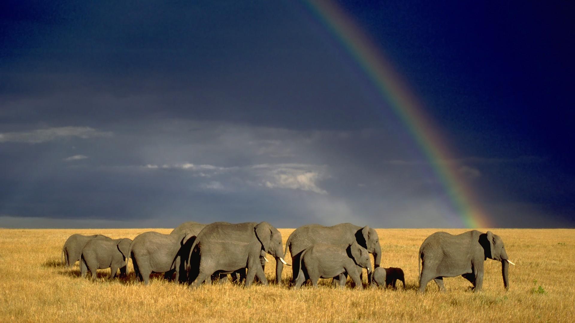 Elephant Wallpapper in Rainbow