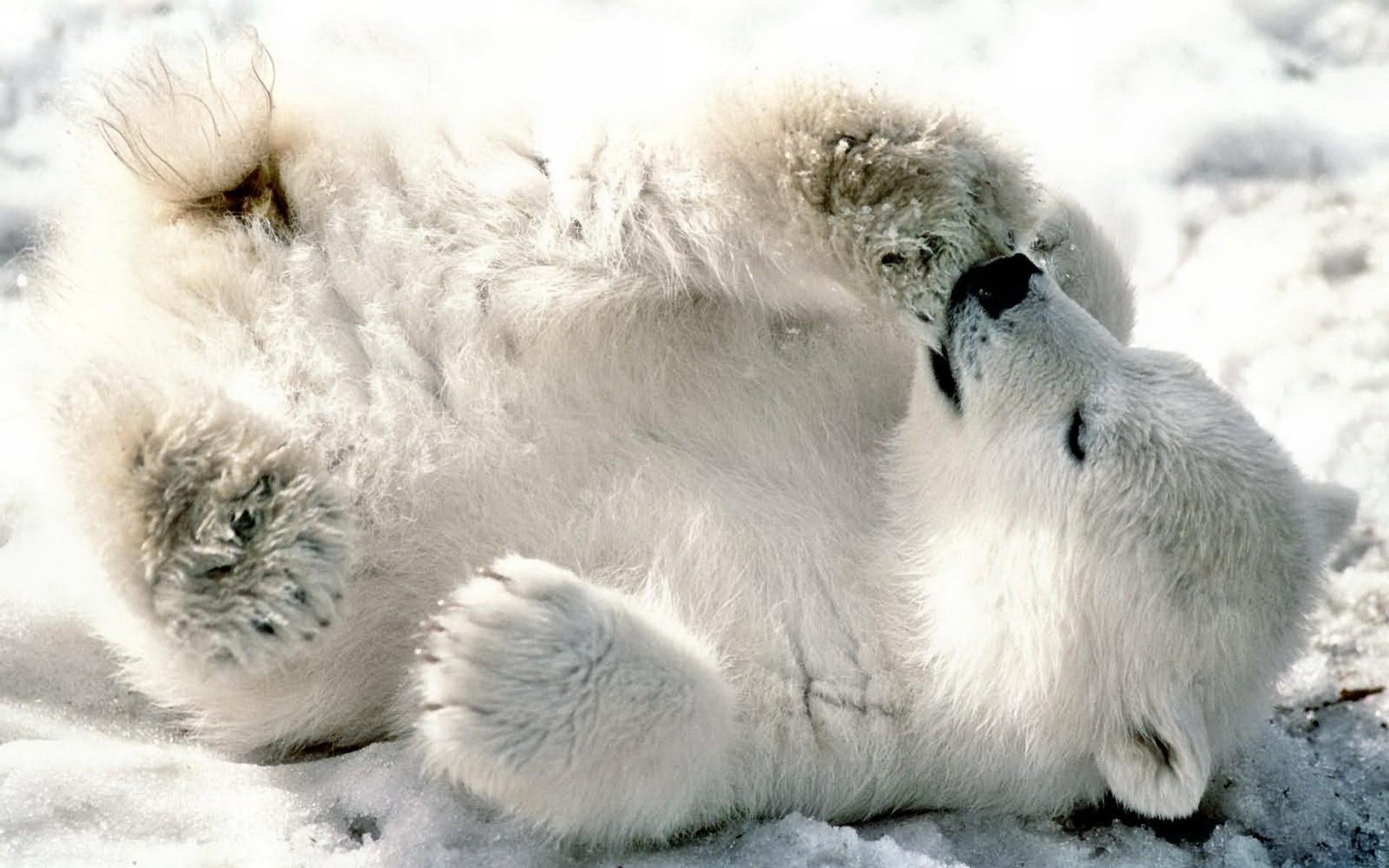 baby bear Photo