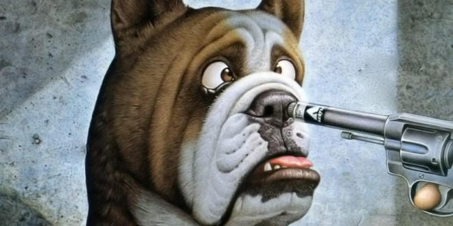 Funny-Dog videos