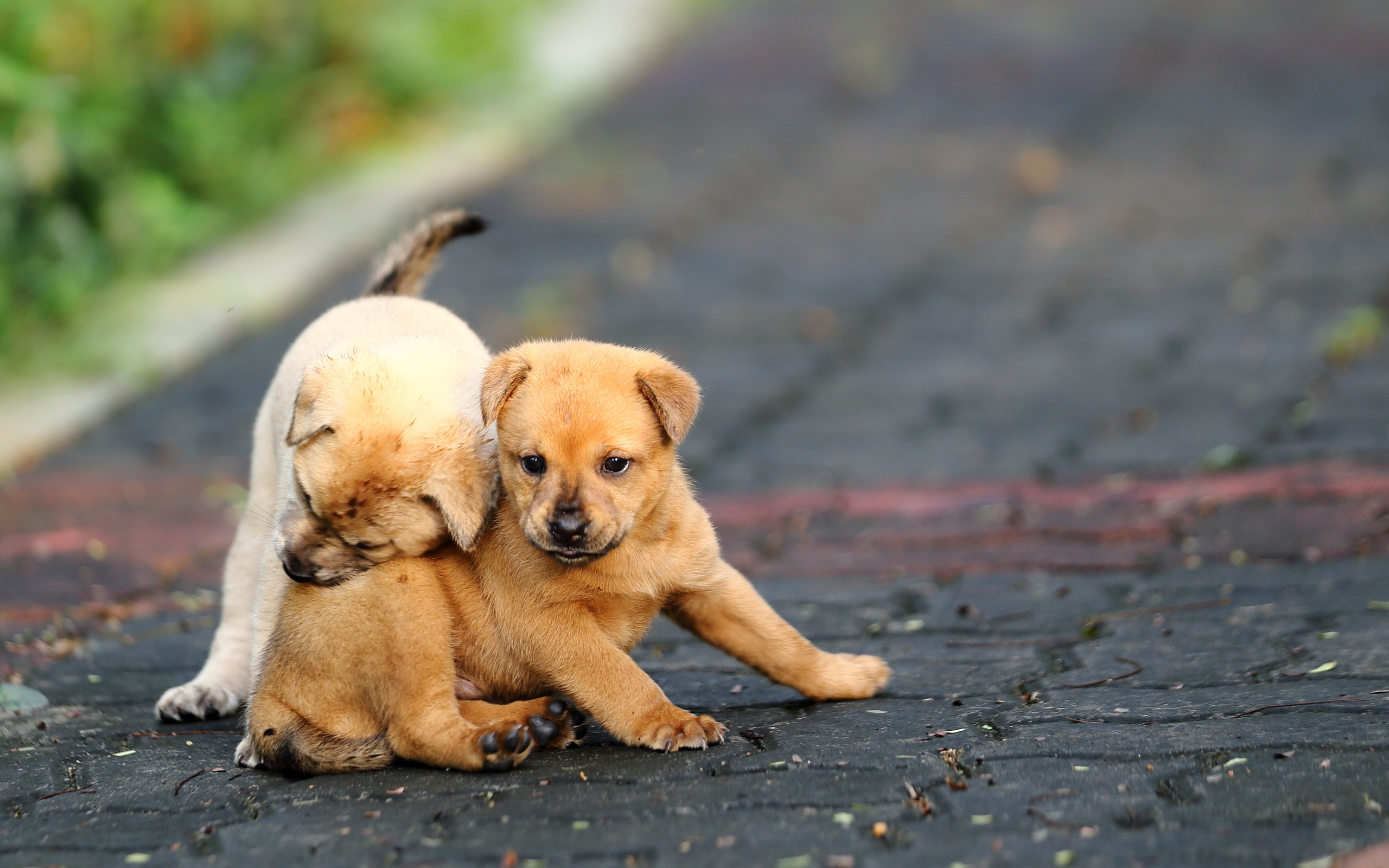 cute puppy videos