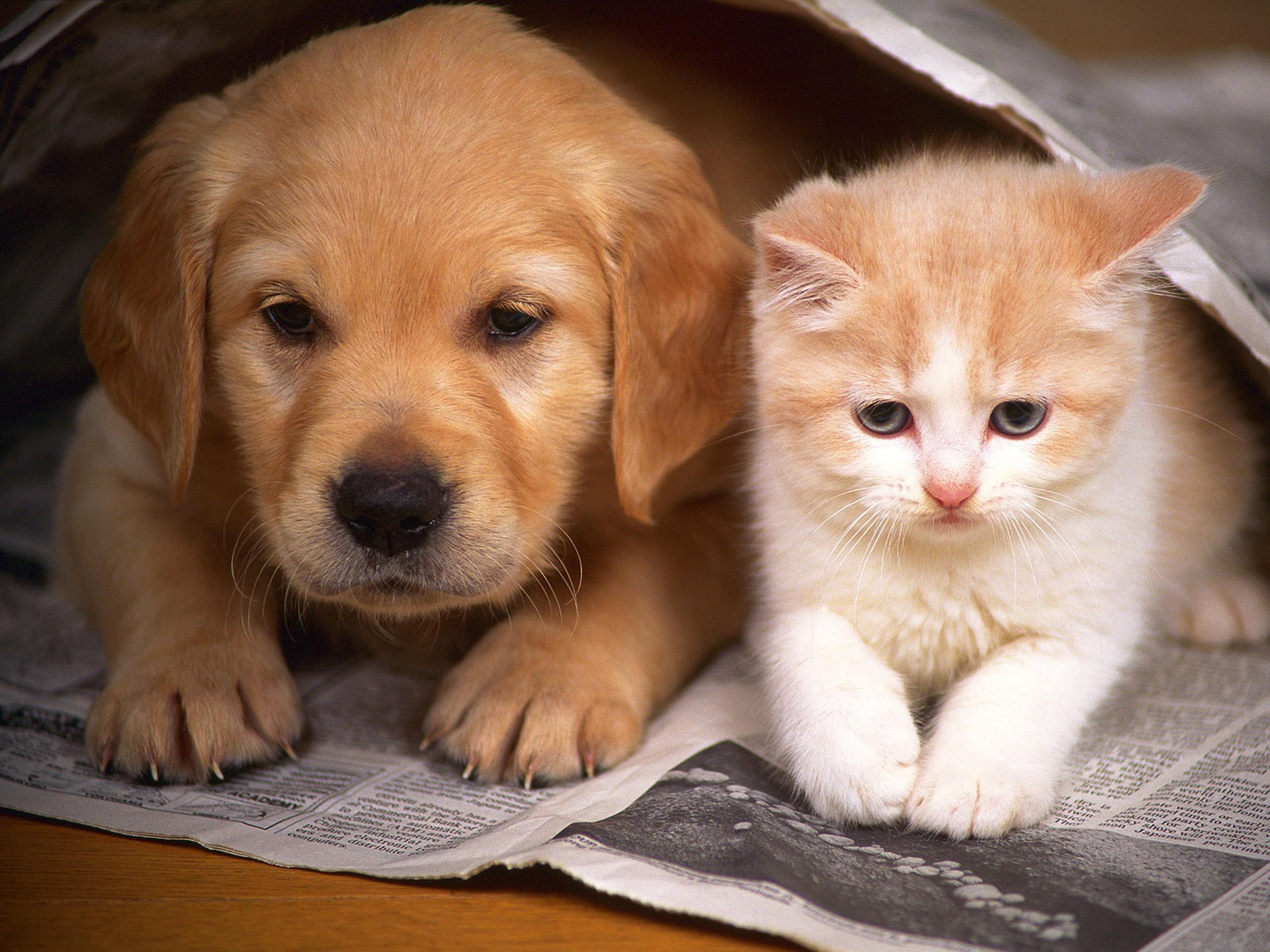 fuuny cats
