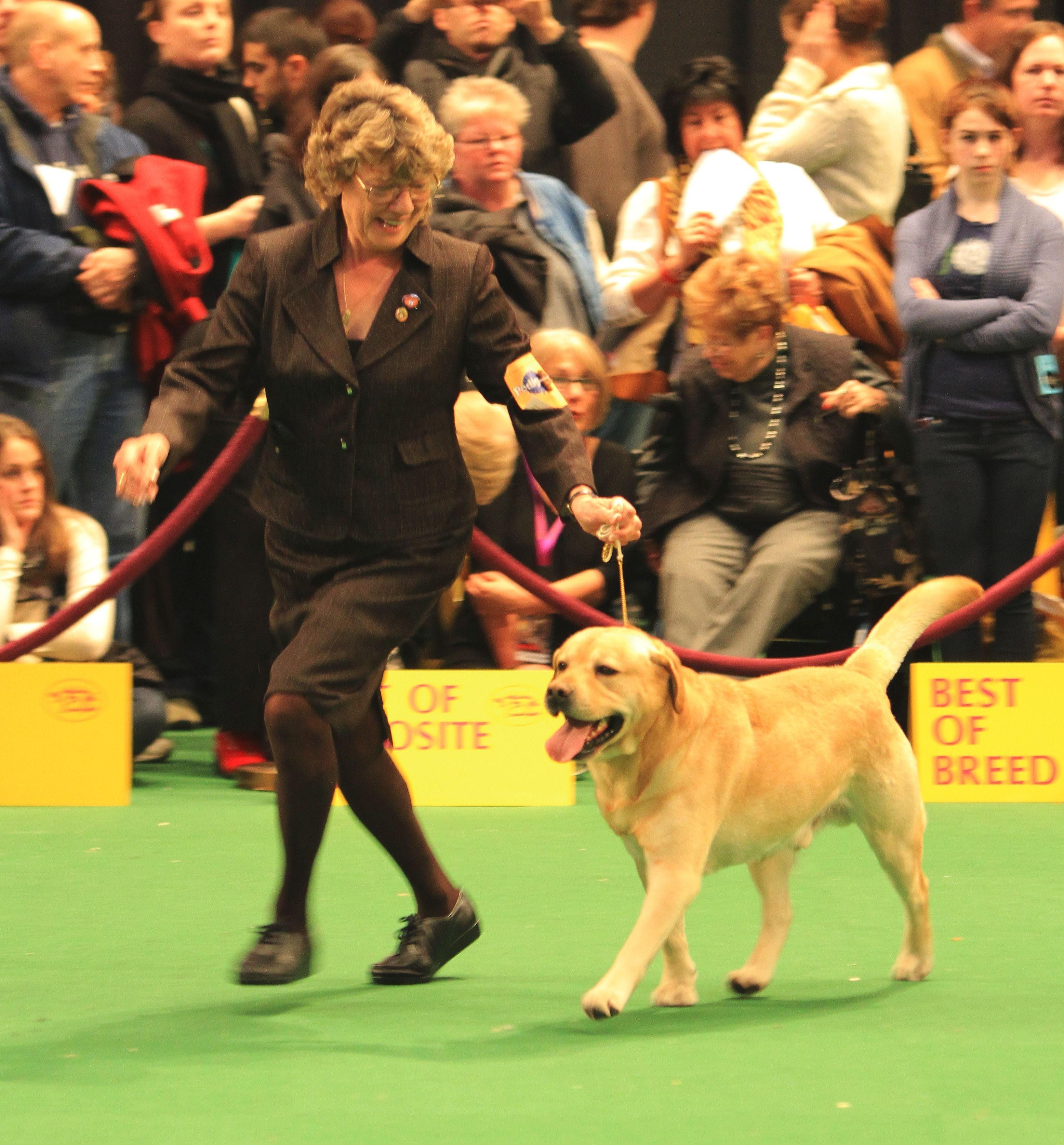 westminster dog show 2014