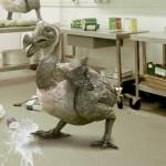 dodo bird habitat