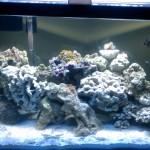 ello aquaria