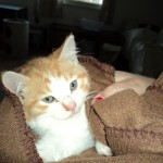 cat photos free
