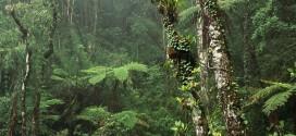 yosemite trees