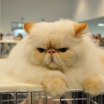 grumpy cat grumpy cat
