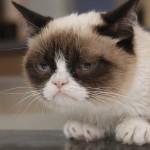 grumpy cat playing