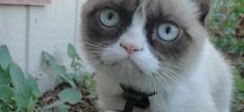 grumpy cat video