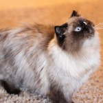 grumpy cat website