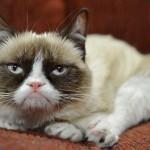 grumpy cat endorsement