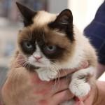 grumpy cat youtube
