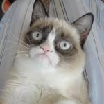 how old is grumpy cat