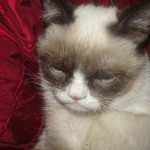 the real grumpy cat