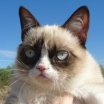 what kind of cat is grumpy cat