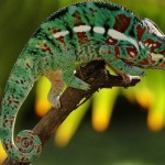 Lizard Videos