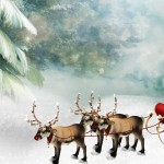 Reindeer Images