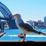Sydney Australia Sights