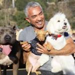 The Dog Whisperer Cesar Millan