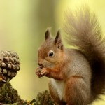 Squirrel Pictures