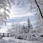 Winter Snow Video