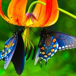 Picture Of Flowers And Butterflies