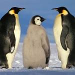Penguin USA