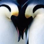 Club Penguin Free