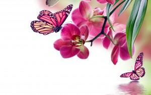 Butterfly On Flower Tattoo