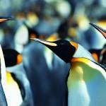Club Penguin Cheats