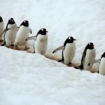 Free Penguin Games