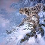 Snow Leopard Wkipedia