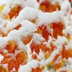 Winter Season Wallpaper