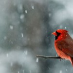 Winter Snow Wikipedia
