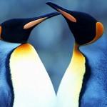 Penguins Trailer