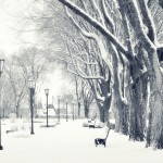 Snow Images Free