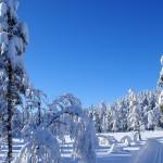 Snow Winter 2014