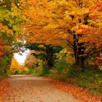 Autumn road trees landscape wide