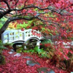 Japanese animated university columbia landscape roads british wallpaper