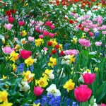 spring flowers wallpaperflower wallpaper background