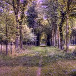 Abstract forest path full hd wallpaper