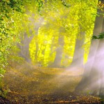 Download forest path images free