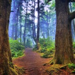 Forest path hd wallpaper