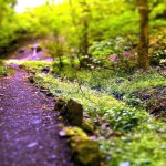 Forest path high resolution wallpaper download forest path images free