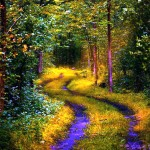 Forest path high resolution wallpaper download free