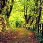Trees autumn season forest path high resolution wallpaper download forest path images free