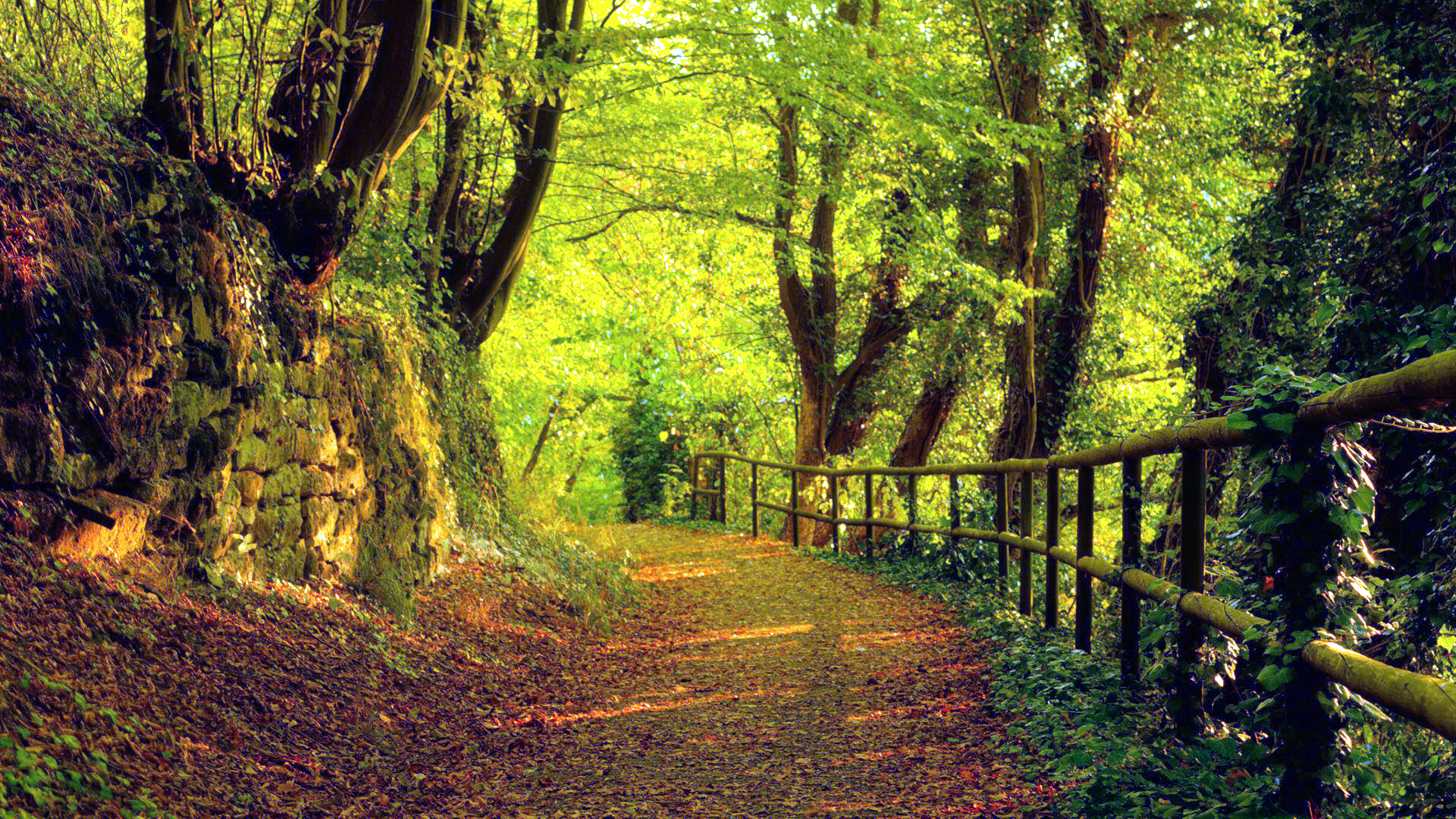 trees autumn season forest path high resolution wallpaper