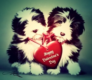 Cute-Puppy-Valentines-Day-Wallpaper-2
